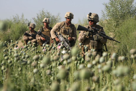 U.S. Marines, from the 24th Marine Expeditionary Unit, patrols through a poppy field near the town of Garmser in Helmand Province of Afghanistan Thursday May 1, 2008. (AP Photo/David Guttenfelder)